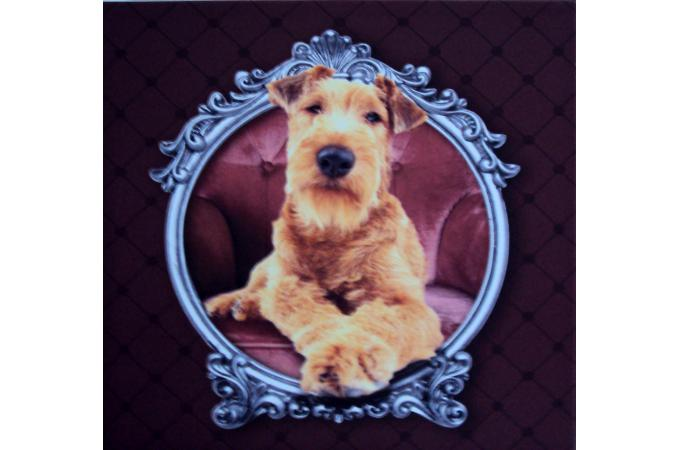 tableau chien baroque violet 30x30 cm tableau animaux. Black Bedroom Furniture Sets. Home Design Ideas