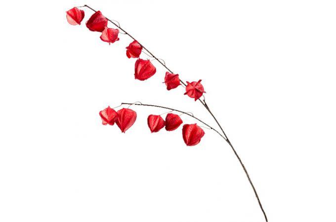fleur artificielle physalis rouge h 107 cm plantes artificielles pas cher. Black Bedroom Furniture Sets. Home Design Ideas