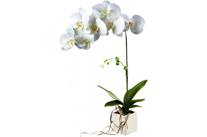 plante artificielle phalaenopsis blanc h 81 cm plantes. Black Bedroom Furniture Sets. Home Design Ideas